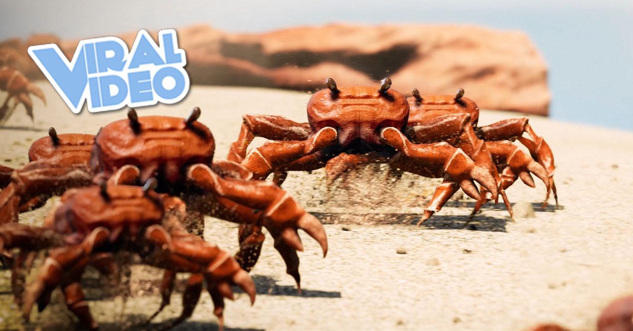 Viral Video: Crab Rave